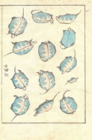 KATSUSHIKA HOKUSAI : (Turtles.) Denshin kaishu-ippitsu gafu.  Drawing Manual – Album of Drawing with one Stroke of the Brush