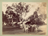 009.     UNKNOWN - ISMERETLEN : [Traditional Cambodian ox cart], cca. 1910.