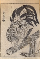 Unidentified artist (Based on an Oguri Sotan painting) : (Cock.)